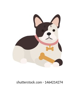 Adorable French bulldog with bone. Lying cute adorable purebred dog or puppy isolated on white background. Funny domestic animal or pet. Gorgeous Frenchie. illustration in flat cartoon style