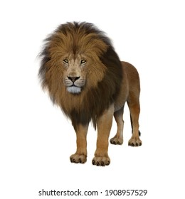 Adult male Lion standing passively looking ahead. 3d render isolated on a white background.