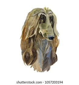 Afghan hound - hand painted, isolated watercolor dog