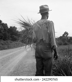 African American man in living in rural Mississippi near Vicksburg on a road where he has gathered some grass. His ragged clothing indicates his poverty. July 1936 photo by Dorothea Lange.