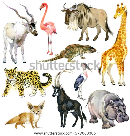 African Animals Watercolor Collection Antelope Wildebeest Stock