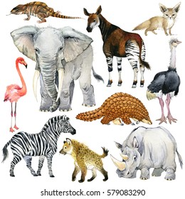 african animals watercolor collection. lizard. elephant. fox. flamingos. okapi. ostrich. pangolin. rhinoceros. hyena. zebra. armadillo