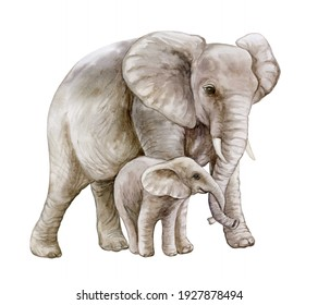 African elephant with a child. Mom and baby. Family isolated on white background. Watercolor. Illustration. Motherhood, childhood
