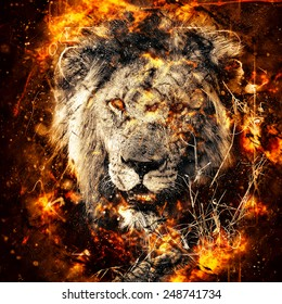 African Lion Illustration With Fire