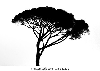 african tree silhouette isolated on white