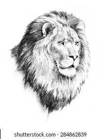 Lion Sketch Images Stock Photos Vectors Shutterstock Easy to draw lion king contentpark co. https www shutterstock com image illustration african wildlife illustration majestic lion head 284862839