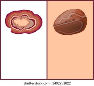 Agate and carnelian or cornelian brownish-red mineral semi-precious gemstones silica chalcedony orange-red colored stone