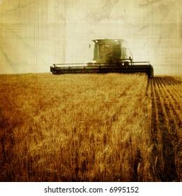 aged harvest