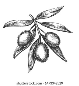 Agricultural Fresh Olive Tree Branch Ink . Leaves And Olive Berries Organic Ingredient Mayonnaise Sauce, Element Canape And Caponata Salad. Designed Tree Detail Template Ink Illustration