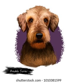 Airedale Terrier breed digital art illustration isolated on white background. Cute domestic purebred animal. Bingley and Waterside Terrier medium-length coat with harsh topcoat and soft undercoat.