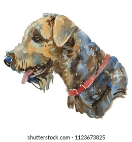 The Airedale Terrier portrait. Hand painted, isolated on white background watercolor dog portrait.