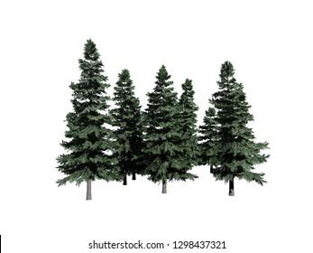 Alaska Cedar tree on white background, 3D illustration, 3D rendering