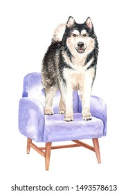 Alaskan malamute of a dog. Watercolor hand drawn illustration. Watercolor Alaskan dog on chair sofa layer path, clipping path isolated on white background.