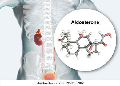 Aldosterone hormone, mineralocorticoid hormone produced by adrenals, 3D illustration