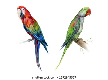 The Alexandrine parakeet. Watercolor of medium-sized green Alexandrine parrot. Vibrant tropical bird illustration. Scarlet macaw parrot. Ara macao.