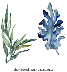 Algae and blue aquatic underwater nature coral reef. Tropical plant sea and ocean water life element. Watercolor background illustration set. Watercolour drawing fashion aquarelle isolated.