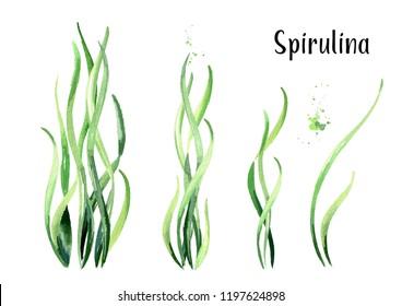 Algae spirulina set. Superfood. Watercolor hand drawn illustration, isolated on white background