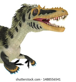 Alioramus altai Dinosaur Head 3D illustration - Alioramus altai was a theropod carnivorous dinosaur that lived in Mongolia during the Cretaceous Period.