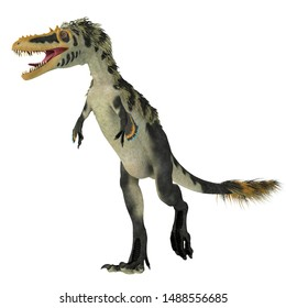 Alioramus altai Dinosaur on White 3D illustration - Alioramus altai was a theropod carnivorous dinosaur that lived in Mongolia during the Cretaceous Period.