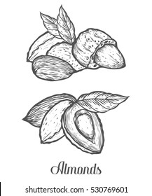 Almond nut seed . Isolated on white background. Almond milk food ingredient. Engraved hand drawn almond illustration in retro vintage style. Organic Food, cosmetics, treatment component.