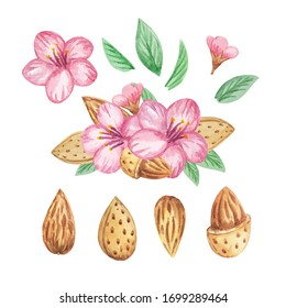 almond nuts with flowers watercolor handpainting illustration isolated pattern stock