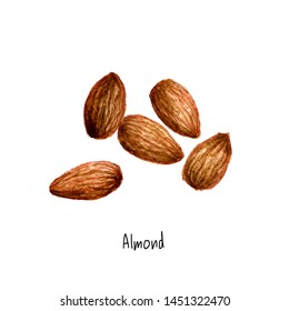 Almond watercolor hand drawn sketch painted of healthy nut seed isolated on white background. cashew illustration of nutmeg watercolour organic food design artwork template,icon logo.