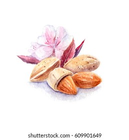 Almonds watercolor illustration