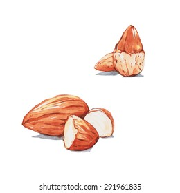 Almonds , watercolor painting.