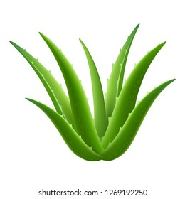 Aloe vera plant icon. Realistic illustration of aloe vera plant icon for web design isolated on white background