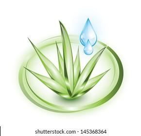 Aloe vera plant with water drops