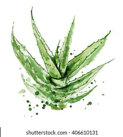 Aloe vera. Watercolor succulent aloe. Original hand drawn watercolor painting isolated on white background. Plant with watercolor splashes, stains. Botanical illustration of Aloe Vera.