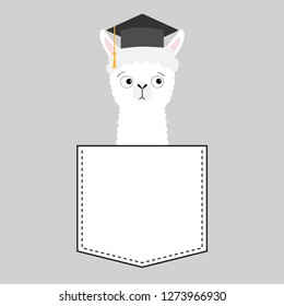 Alpaca llama sitting in the pocket. Face with graduate hat. T-shirt design. Cute cartoon funny character. Kawaii animal. Love Greeting card. Flat design style. Gray background.