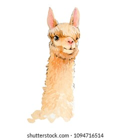 alpaca sketch watercolor on white background