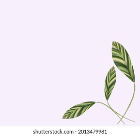 Alpinia zerumbet illustration isolated beautiful pattern design on background for decoration in art and graphics.  digital painting