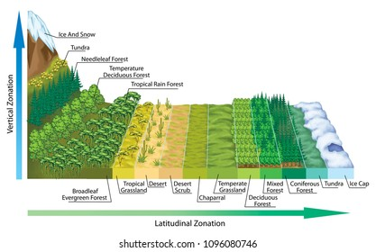 Altitudinal and latitudinal zonation of vegetation, vegetation zonation in altitudinal and latitudinal plan, the main biomes display zonation in relation to latitude and climate.