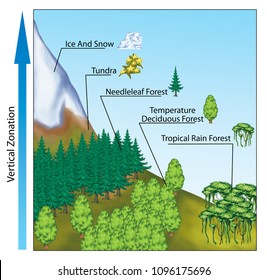 Altitudinal zonation of forest vegetation, altitudinal zonation in mountains, vegetation zonation in mountains, the main biomes display zonation in relation to latitude and climate.