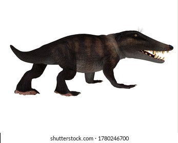 Ambulocetus Walking Whale 3D illustration - Ambulocetus was the primitive otter-like ancestor of the whale and lived in Pakistan and India during the Eocene Period.