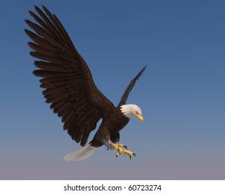 american bald eagle blue sky goes down