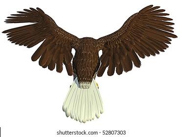 american bald eagle flying back