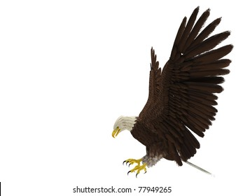 american bald eagle hunting side attack