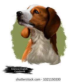 American English Coonhound dog digital art illustration isolated on white background.