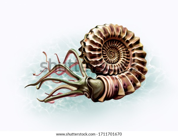 ammonite (Ammonoidea) in the ocean, realistic drawing, reconstruction of the species, illustration for the encyclopedia of ancient animals, isolated image on white background