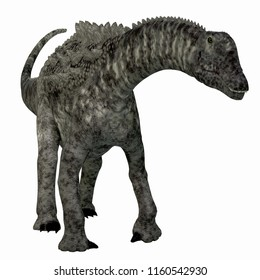 Ampelosaurus Dinosaur on White 3D illustration - Ampelosaurus was a herbivorous sauropod dinosaur that lived in Europe during the Cretaceous Period.