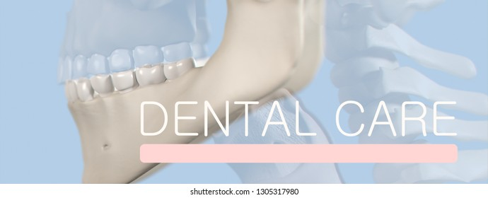 """Anatomical dental model of human teeth for dentistry, dental care, medical students. Title on image """"Dental Care"""". 3d illustration"""