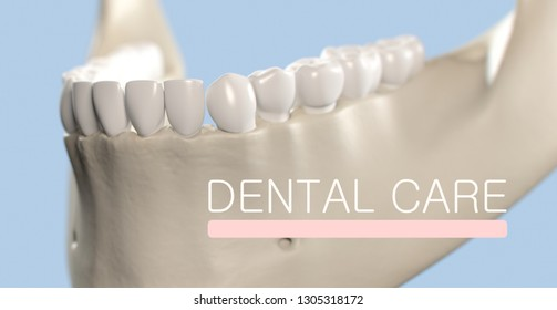 "Anatomical dental model of human teeth for dentistry, dental care, medical students. Title on image ""Dental Care"". 3d illustration"