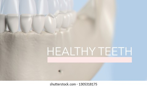 "Anatomical dental model of human teeth for dentistry, dental care, medical students. Title on image ""Healthy Teeth"". 3d illustration"