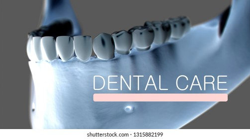 "Anatomical dental model of human teeth for dentistry, dental care, medical students. With title ""Dental Care"". 3d illustration."