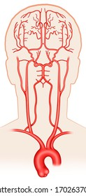 Anatomical and descriptive illustration of the main arteries that carry blood in the brain.