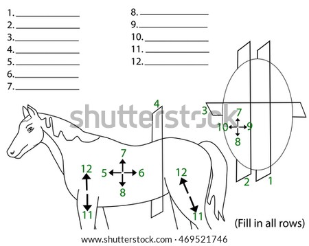 Anatomical Terms Direction Planes Section Medical Stock Illustration