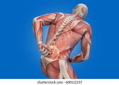 anatomical vision back pain. 3D illustration.